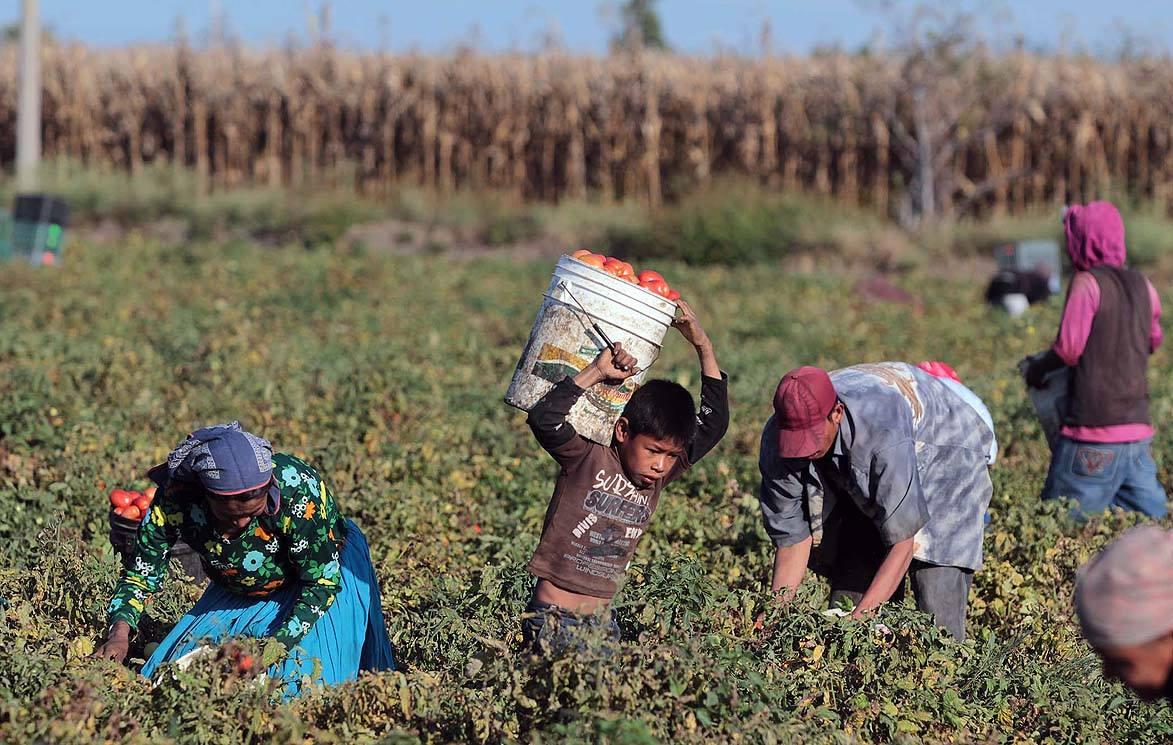 farmworker_latinbriefs