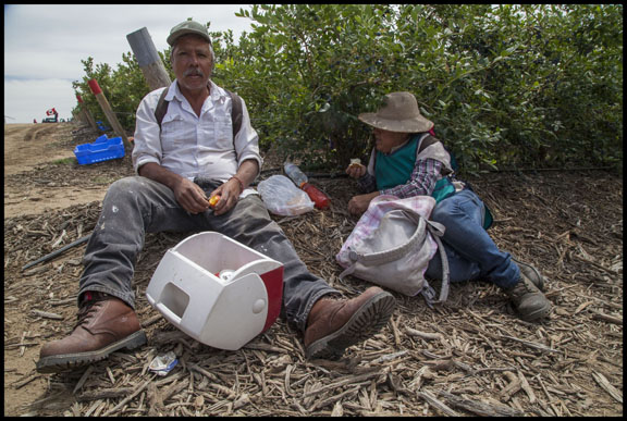 MCFARLAND, CA  (5/21/16) -- Farm workers at lunchtime during a union organizing campaign by the United Farm Workers, at Klein Management Company.  Workers at the company pick blueberries.  After the company cut their wages, workers stopped work, and then voted for the union in an election supervised by California's Agricultural Labor Relations Board.  Most workers are indigenous Mixtec and Zapotec migrants from Oaxaca, Mexico.  Copyright David Bacon