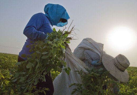 The fight isn't over for farmworkers overtime work hours pay