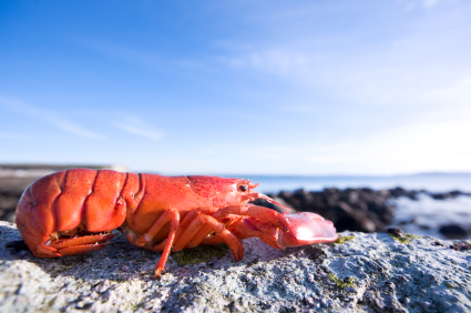 Shrimp and lobsters have powerful anti- inflamatory properties