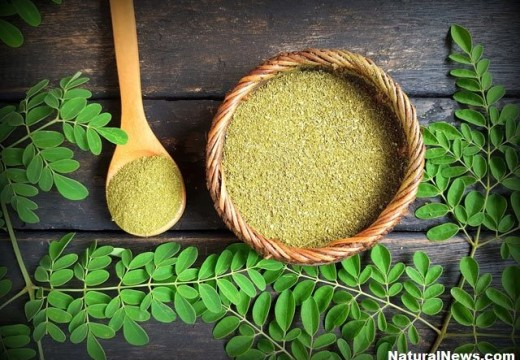 Moringa: The power-packed plant
