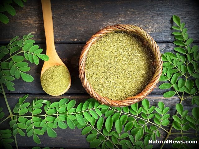 Moringa-leaf-powder_health