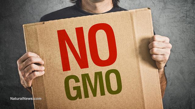 NO-GMO_health