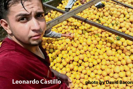 Picking fruit at 42 C: work can be a struggle