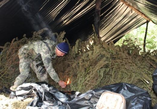 Dentro de las plantaciones de canabis ilegal de Paraguay