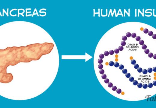 Los que muchos no saben acerca de la importancia del páncreas