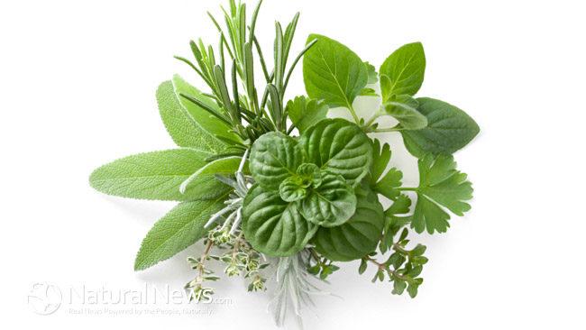 Herbs_health