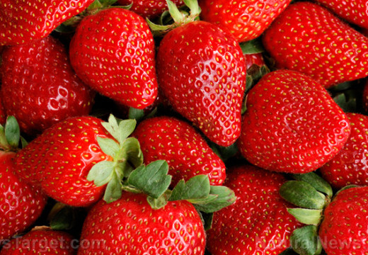 The many health benefits of eating organic strawberries