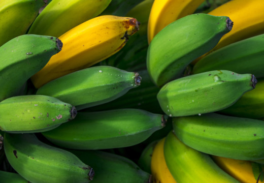 Stem juice from bananas a potential natural cure for diabetes