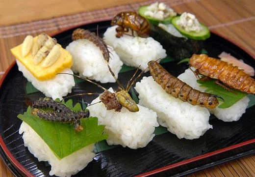 The Art of Eating Insects: exhibition set to open in Mexico City