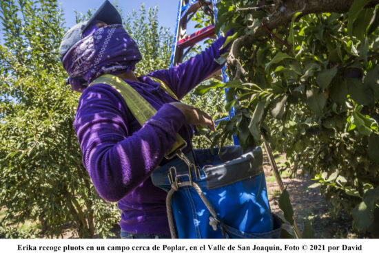 Essential but disposable: how California farmworkers battle COVID-19