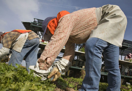 Farm Workforce Modernization Act: good for growers, bad for workers